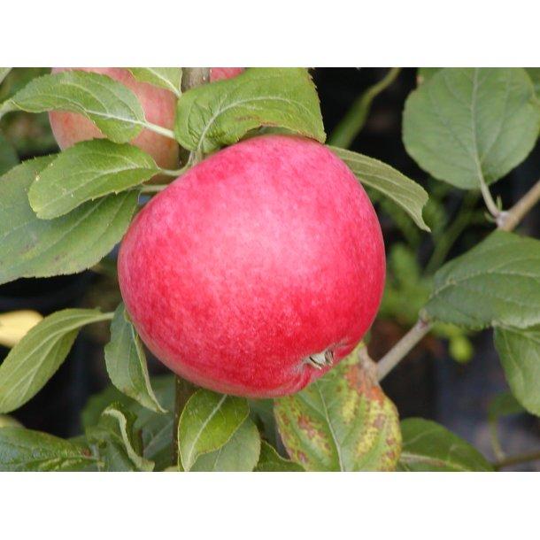 Rød Ananas Æble